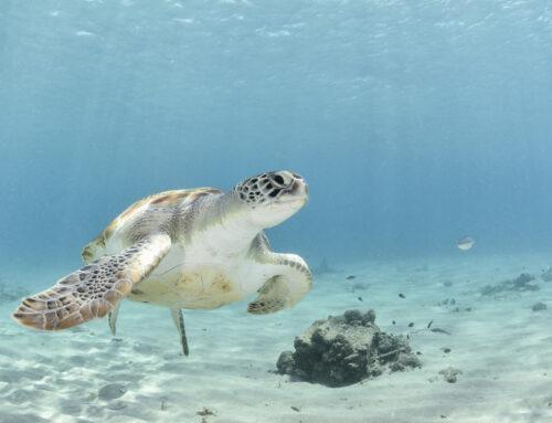 Meeresschutzgebiet im spanischen Mittelmeer noch vor Weihnachten?