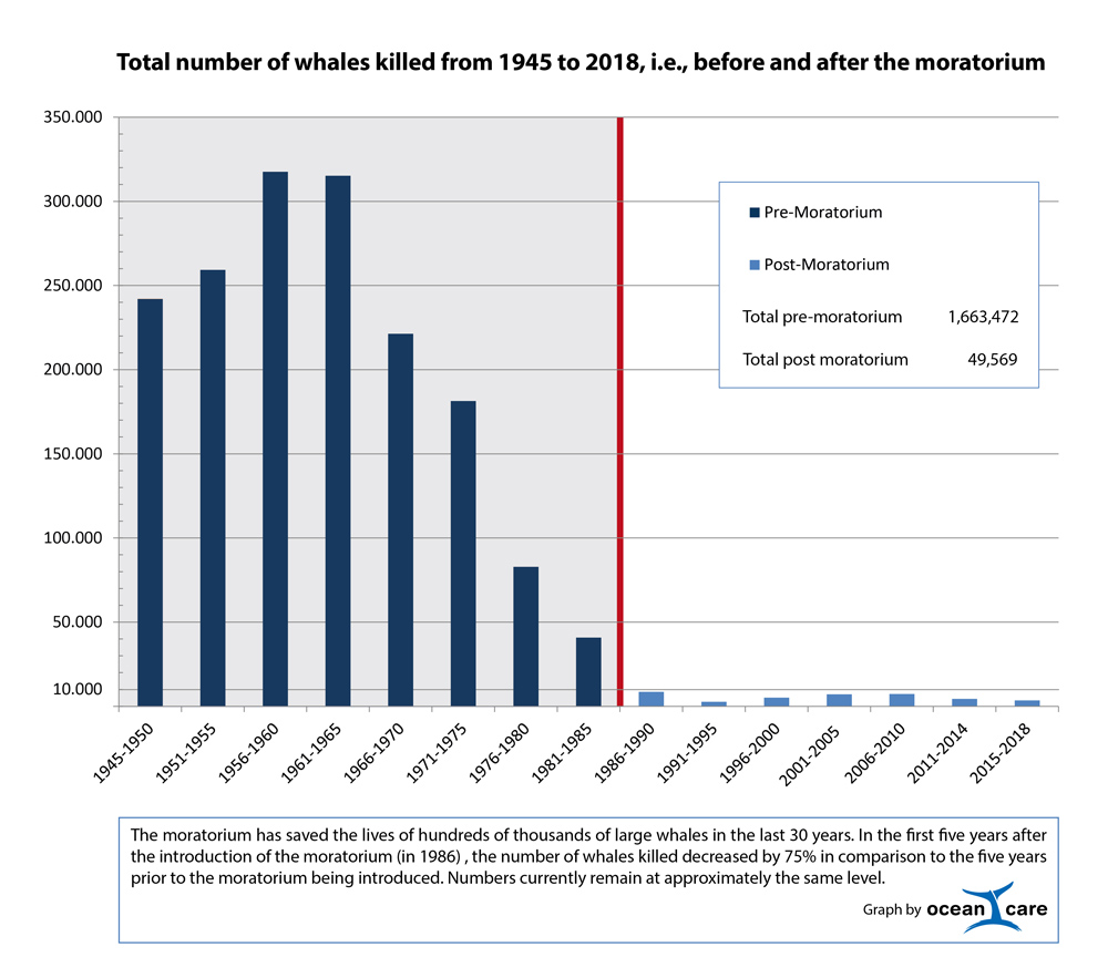 Number of whales killed 1945-2017. The numbers of whales killed before and after the moratorium shows the significant impact of the ban on commercial whaling.