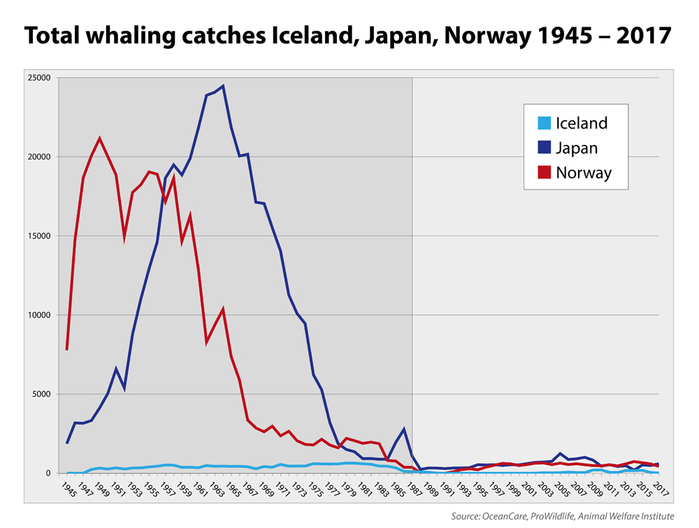 Japan compared to Norway and Iceland. In 2017 Japan was whaling nation no. 1.
