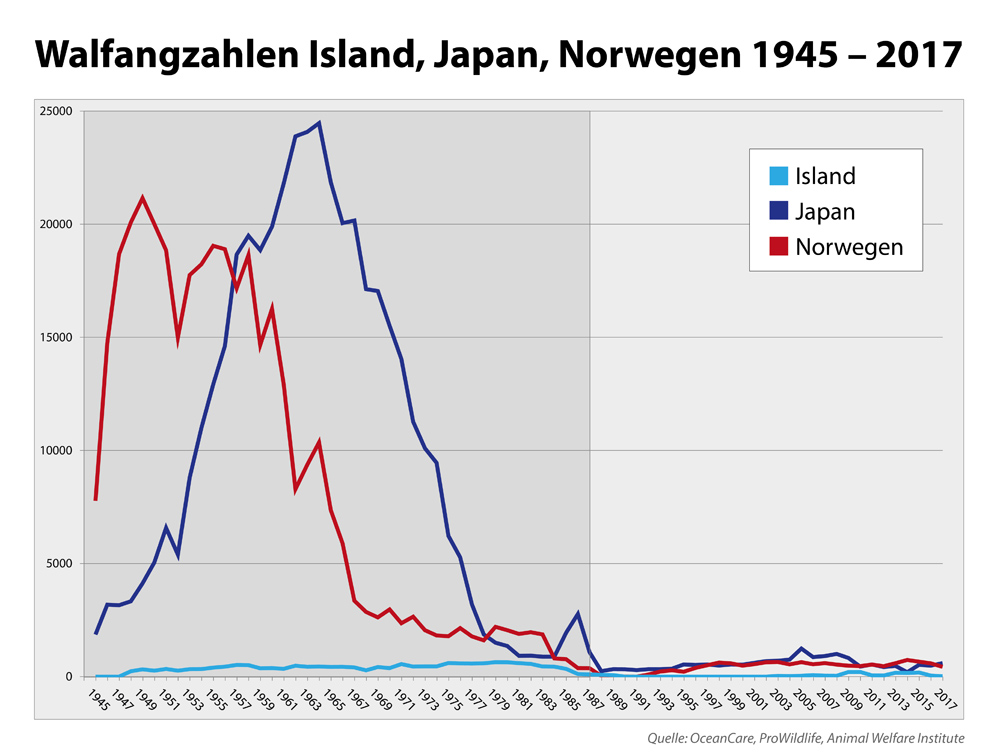 Grafik Japan im Vergleich zu Norwegen und Island. 2017 war Japan wieder Walfangnation Nr. 1.