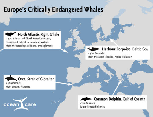 To be or not to be – whales and dolphins in European waters