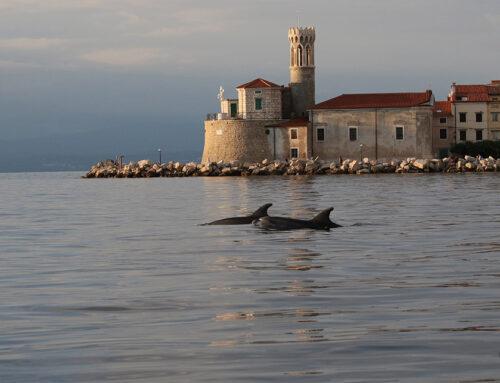 Delphine vor Piran – normal aber nicht selbstverständlich