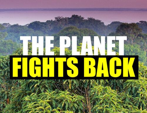Umweltzerstörung – Ein Verbrechen gegen die Menschlichkeit